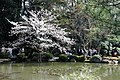 Heian Shrine (5766627415).jpg