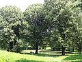 Henneberggarten kleiner Teich Zgorzelec.JPG