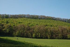 Hermannskogel - Hermannskogel (and top of Habsburgwarte) seen from the Rohrerwiese