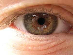 A high-resolution image of a human eye/iris. This eye/iris in question belongs to Colin Sasseen and was taken by Jake Maheu using a Canon Powershot A410.
