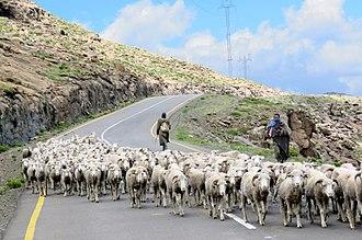Economy of Lesotho - High-mountain shepherds.