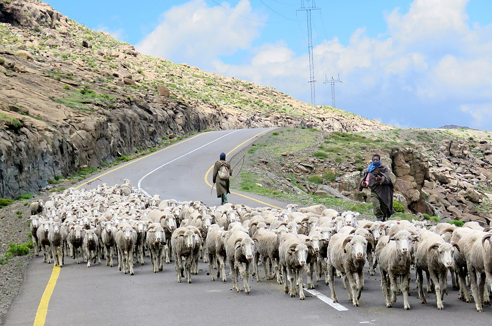 High mountain Shepherds