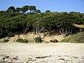 Highcliffe Castle beach - geograph.org.uk - 260957.jpg