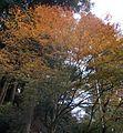 Hikosan Jingu autumn leaves 01.jpg