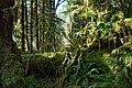 Hoh rainforest scenic mossy logs r mckenna march 2015 (17125821760).jpg