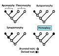 Homoplasy.jpg