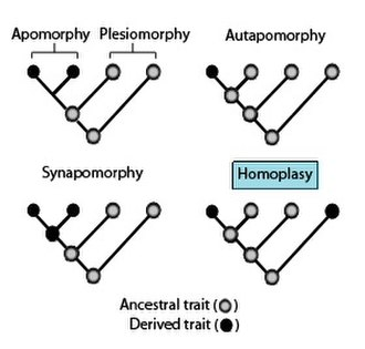 Homoplasy - Homoplasy is the similarity in trait that is not due to a common ancestor.