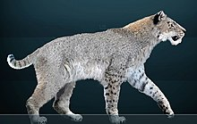 Homotherium - Wikipedia