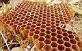 Honeycomb 15 03 2012.jpg
