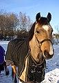 Horse07.jpg