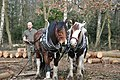 Horse Logging in the Out Woods, Charnwood Forest - geograph.org.uk - 1441301.jpg
