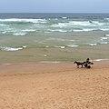 Horse cart (5728191168).jpg