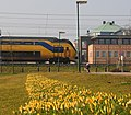 Houten with spring by Crocus flowers at 16 Februari 2015 - panoramio.jpg