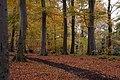 Huntly Wood near Banbridge (2) - geograph.org.uk - 280694.jpg