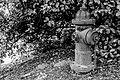 Hydrant (19159138671).jpg