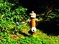 Hydrant - panoramio (6).jpg