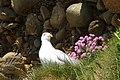 IERLAND SCHOTLAND 2004 052 (5976919903).jpg