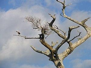 Jonathan Dickinson State Park - Image: Ibis (Jonathan Dickinson State Park, Florida, 11 January 2006)