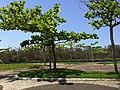 Iguape - SP - panoramio (208).jpg