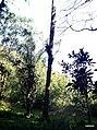 Iguape - SP - panoramio (286).jpg
