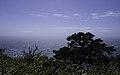 Ilha das Flores P5260094 (35199712463).jpg
