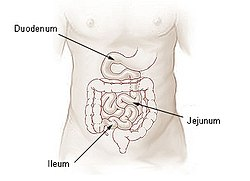 meaning of jejunum