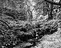 In Ballaglass Glen - geograph.org.uk - 1630428.jpg