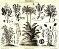 Industriepflanzen Meyer 1888.jpg