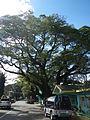 Infanta,Pangasinanjf0215 31.JPG