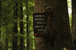 Bark pocket - A sign ingrown into a tree trunk.