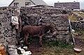 Inisheer-20-Bauernhaus-Esel-1989-gje.jpg