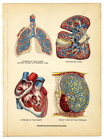 BI 202 Anatomy and Physiology II - Biology Resources - LibGuides at ...