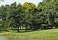 Jackfruit Season (17721688131).jpg