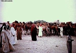 Al Jahra - Al Jahra camel market, 1961