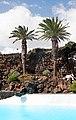 Jameos del Agua - Lanzarote.jpg