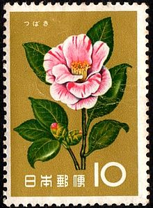 Camellia Flower Meaning Flower Meaning