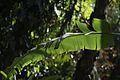 Jardim Botânico do Rio de Janeiro - 130716-7019-jikatu (9342518221).jpg