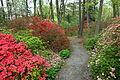 Jenkins Arboretum - DSC00561.JPG