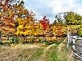 Jesień ,Autumn - panoramio.jpg