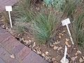 Johannesburg Botanical Garden herb section02.JPG