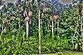 Jungle - panoramio (5).jpg