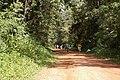 Kakamega Rainforest - panoramio.jpg