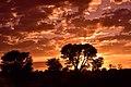 Kalahari sunset, Kalahari, Northern Cape, South Africa (20350899030).jpg