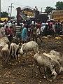 Kano fruit market.jpg