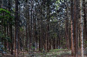 Karura Forest - Karura Forest