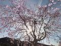 Kasai Tamaoka Historic Park 玉丘史跡公園 DSCF6553.JPG