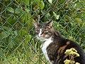 Katter (6062409816).jpg