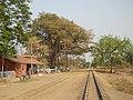 Katwa to Ahmedpur Narrow gaugue railway 13.jpg