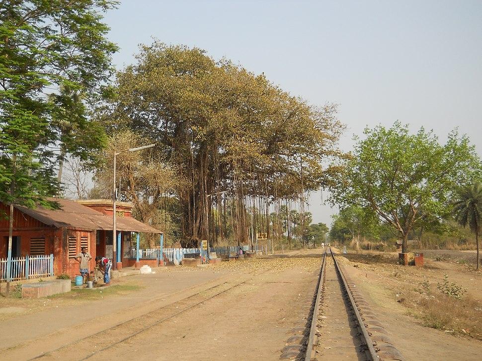 Katwa to Ahmedpur Narrow gaugue railway 13