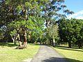 Keiraville NSW 2500, Australia - panoramio (34).jpg